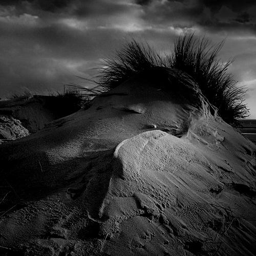 shadowland500.jpg
